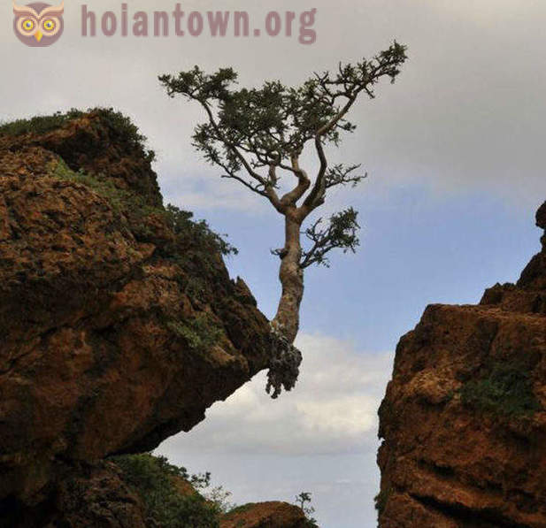 Trees growing in the most unusual places