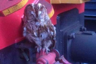 Owl miraculously survived a train ride across half the country