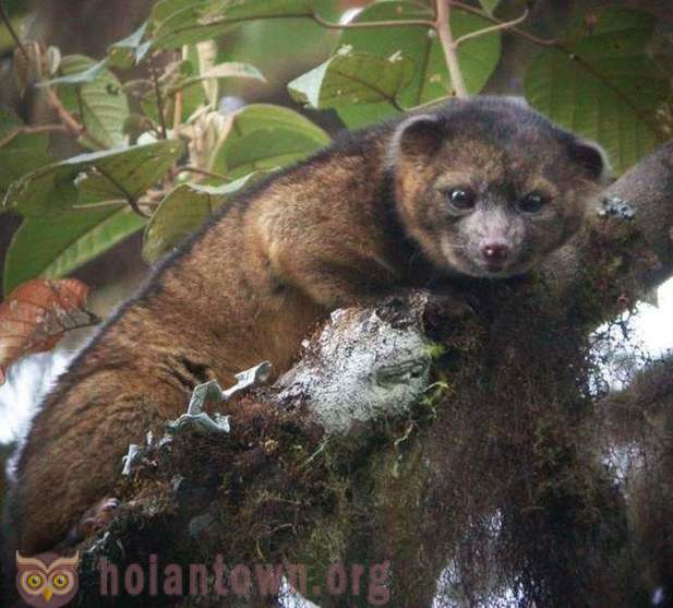 The first new mammal species discovered in 35 years in America