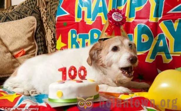 British dog-champion celebrated its 100-year anniversary