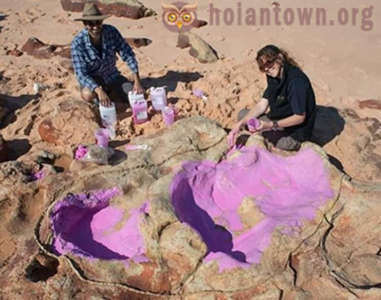 On the coast of Australia, discovered large concentrations of dinosaur footprints