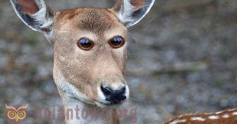 Masters of Photoshop: If the animal's eyes were the same as in humans