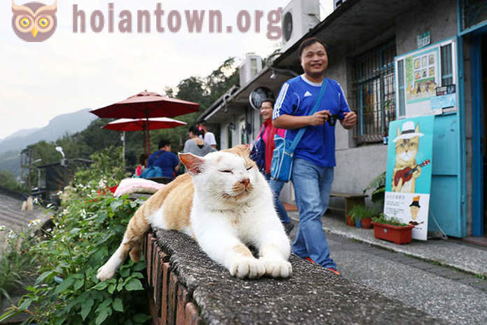 Village in Taiwan, which cats rescued from neglect