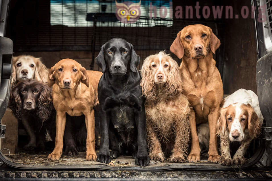 Winners of the competition Dog Photographer Of The Year 2018