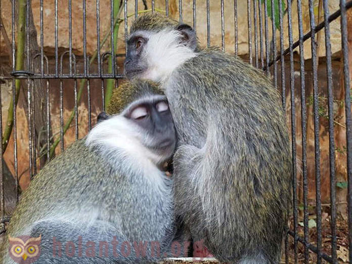 Monkeys survived in a small cage through mutual support