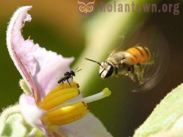 Amazing private life of insects