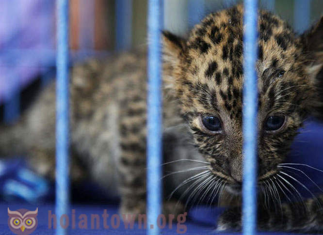 Exotic animals seized from smugglers